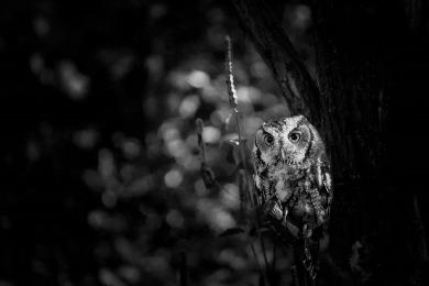 owl-1377983_1280