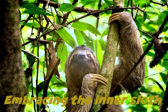 sloth-2759724_1920